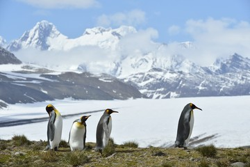 Penguins-of-Antarctica-HGR-47819 1024